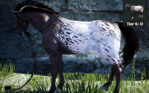 Buy T6 Breedable Female Horse in Black Desert on console
